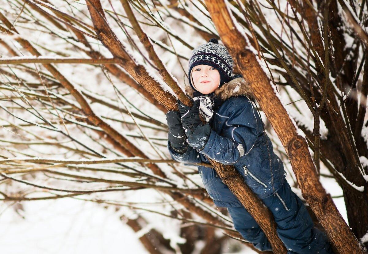 Hvorfor fryser ikke trærne i hjel om vinteren?